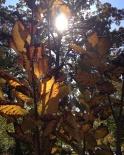 Catching the sun peeking through fall foliage
